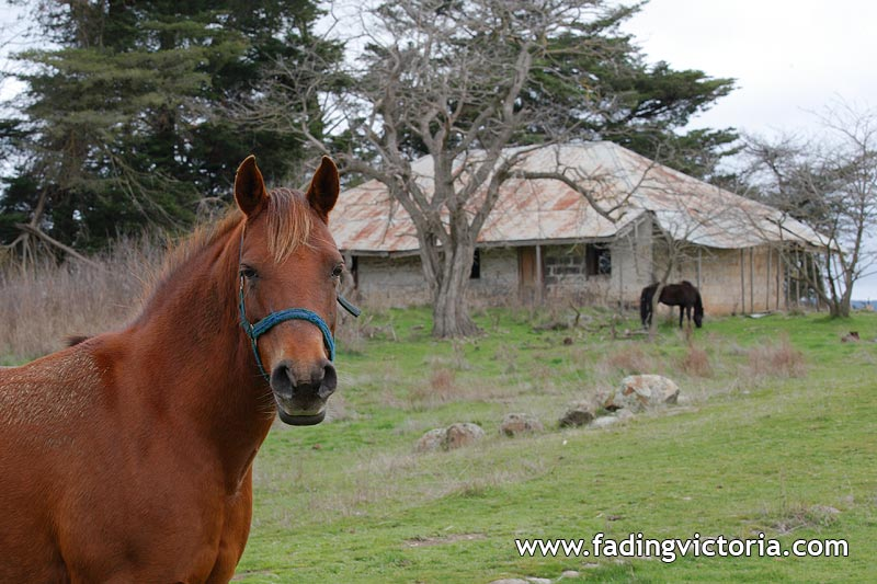 Revisit: Derelict house, and horses